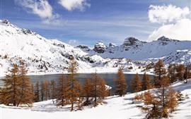 Blanca nieve, invierno, árboles, lago