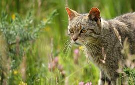 Preview wallpaper Wildcat, look, grass
