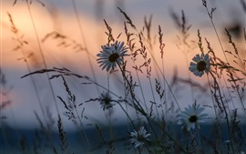 Wildflowers, grass, dusk