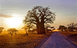 Preview wallpaper Africa, trees, road, sunshine, morning, autumn
