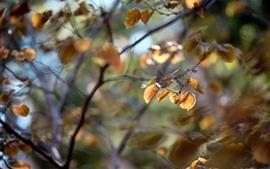 Automne, feuilles, brindilles
