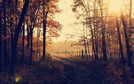 Manhã de outono, árvores, nevoeiro, raios de sol, cerca