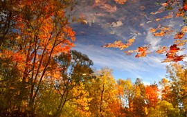 Otoño, estanque, reflejo de agua, árboles, hojas rojas de arce