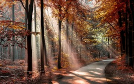 Preview wallpaper Autumn, sun rays, trees, road, red leaves