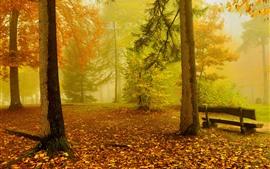 Otoño, árboles, niebla, banco, paisajes de la naturaleza