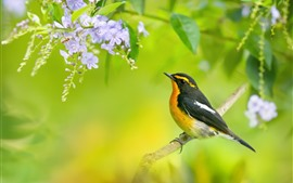Bird, bee, flowers, tree, spring