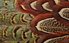 Preview wallpaper Bird feathers macro photography, texture