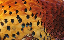 Preview wallpaper Bird feathers, texture
