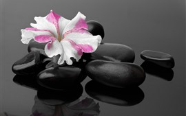 Preview wallpaper Black stones, one flower, SPA