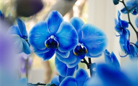 미리보기 배경 화면 푸른 호 접, 난초