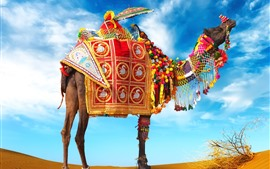 Preview wallpaper Camel, umbrella, colorful decoration, desert