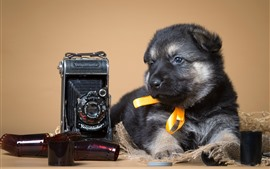 Preview wallpaper Cute puppy and camera