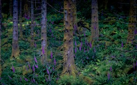 Bosque, flores de campanas moradas