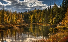 Forest, river, trees, autumn, clouds