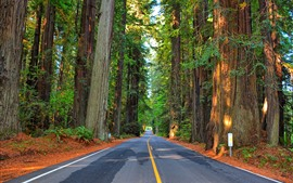 Preview wallpaper Forest, trees, road, highway