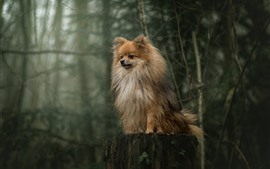 Preview wallpaper Furry dog, stump, forest