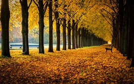 Germany, Lower Saxony, alley, park, trees, bench, leaves, autumn
