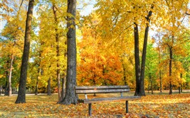 Preview wallpaper Golden autumn, bench, trees, leaves, park