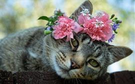 Gato cinzento, flores