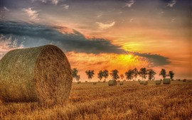 Hay, sunset, summer, trees, clouds