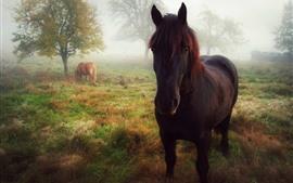 Лошадь, вид спереди, взгляд, трава