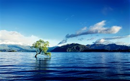 Lonely tree, water, lake, mountains