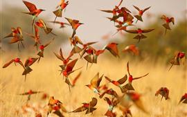Vôo de muitos pássaros