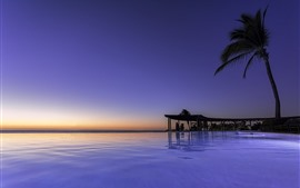 Мексика, Наярит, Пальма, море, пальма, тропик, закат