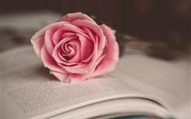 One pink rose and book
