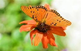Оранжевый цветок и бабочка
