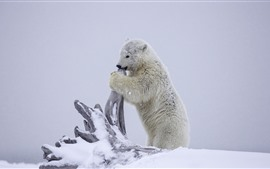Preview wallpaper Polar bear, snow, dry tree