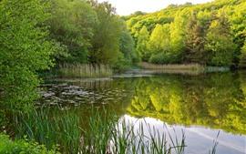 미리보기 배경 화면 연못, 나무, 녹색, 물 반사