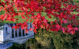 Preview wallpaper Red maple leaves, pond, autumn