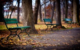 Some benches, trees, park, ground, leaves