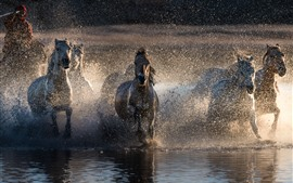 Preview wallpaper Some horses running in water, splash