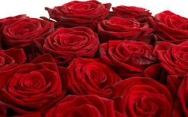 Некоторые красные розы крупным планом, лепестки