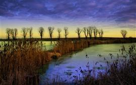 Algunos árboles, juncos, nubes, otoño, río, anochecer