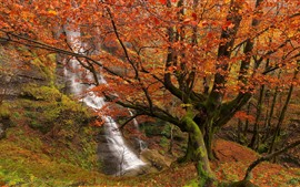 Spain, waterfall, trees, autumn, red leaves