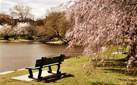 Spring, tree flowers bloom, pond, park, bench