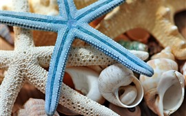 Estrela do mar, concha, ainda vida