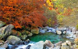 Aperçu fond d'écran Pierres, ruisseau, arbres, buissons, automne