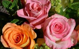 Tres rosas, rosa y naranja.
