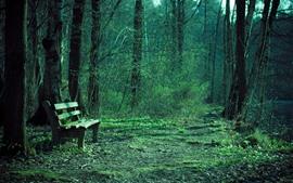 Trees, bench, green, park