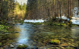 Trees, creek, moss, stones, snow