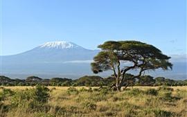 Árvores, grama, montanha, natureza paisagem