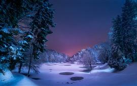 Arbres, nuit, neige, étang, hiver