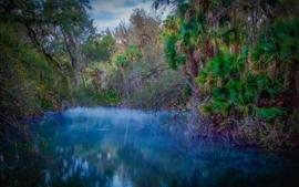 Árboles, río, tropical