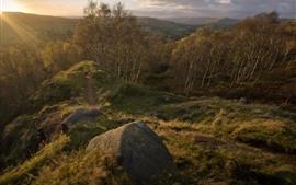 Trees, sunshine, rocks, morning, nature scenery