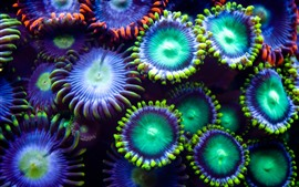 Debaixo d'água, plantas, coloridas