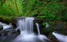 Cachoeira, árvore, musgo, verde, natureza
